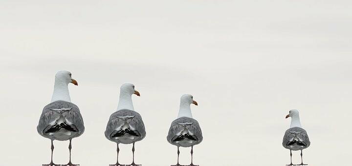 gulls-2662550__340